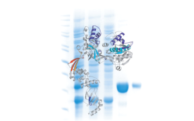 The Proteins and Peptides Platform has joined the LTA!